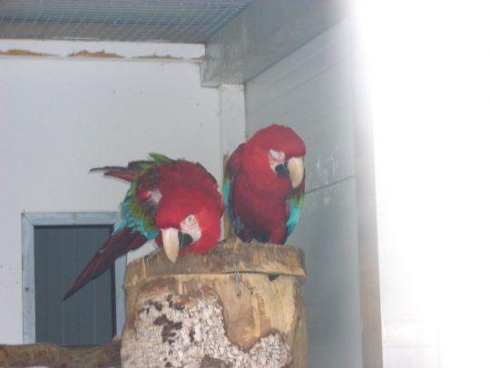 Vogelauffangstation